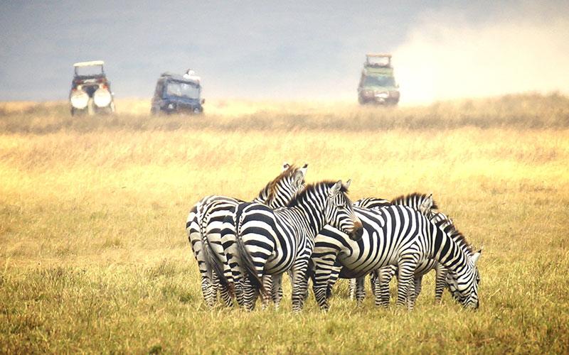 In Serengeti nationaal park in Tanzania maken wij een schitterende safari.