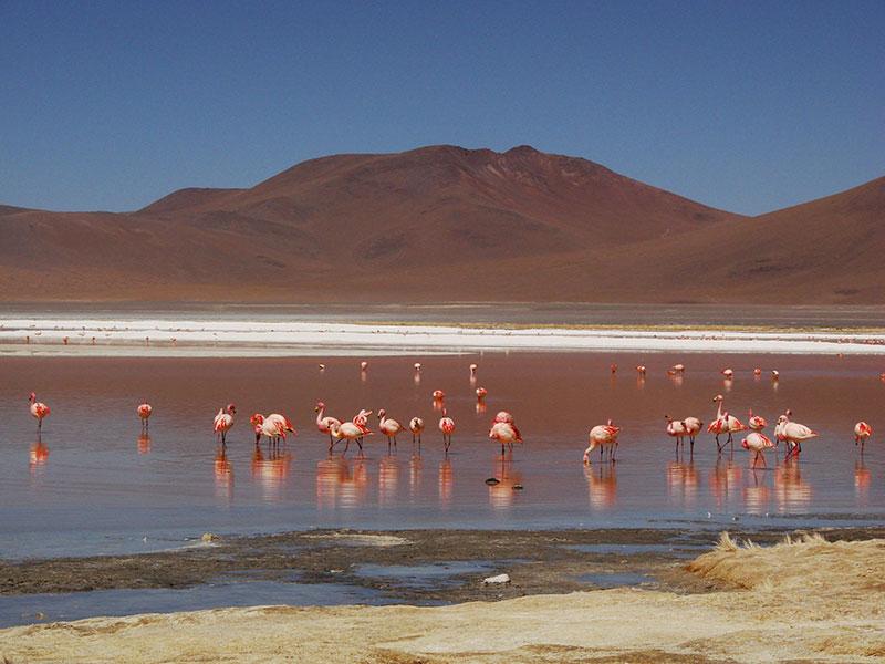 In noord Chili in de Atacama woestijn kunt u tijdens een individuele reis duizenden flamingo's bij de zoutmeren bezichtigen.