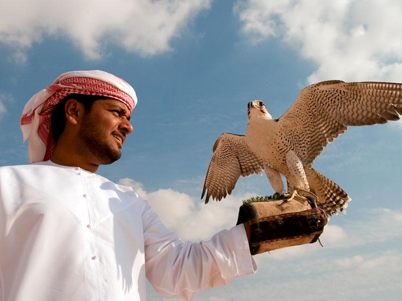 Een valkenier in Dubai
