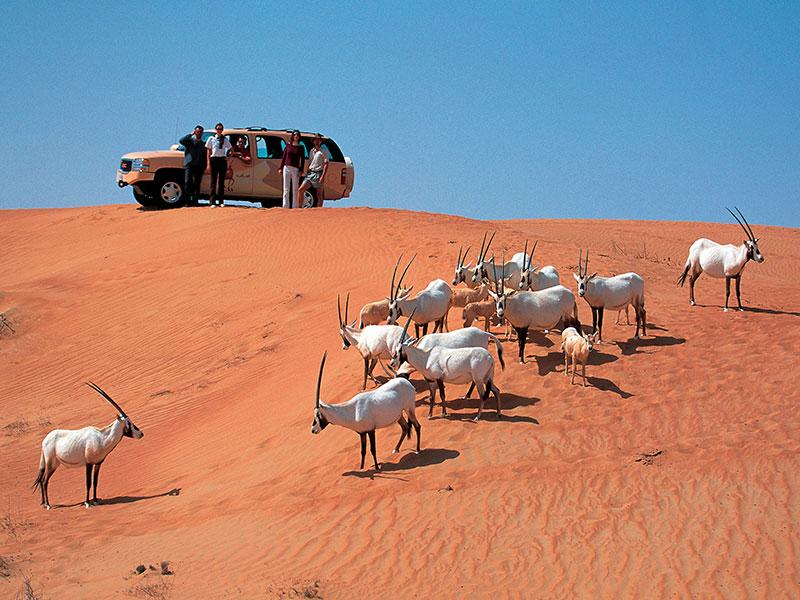 Op de laatste dag van de autorondreis maakt u een woestijn safari.