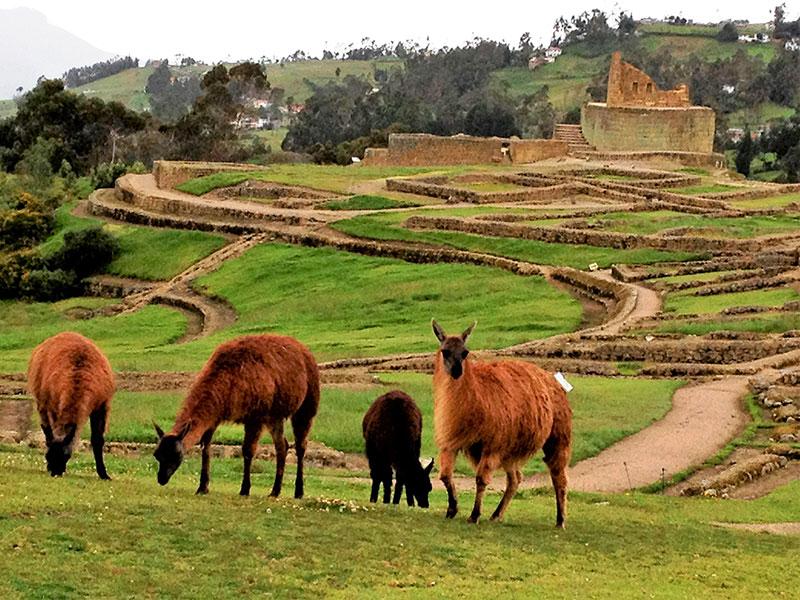 De opgravingen van Ingapirca liggen in het zuiden van Ecuador. Dit is een prachtige plaats die u bezoekt tijdens uw rondreis.