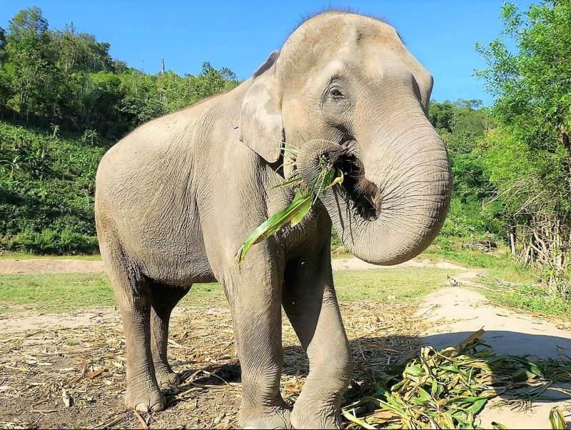 tijdens deze individuele reis ziet u olifanten