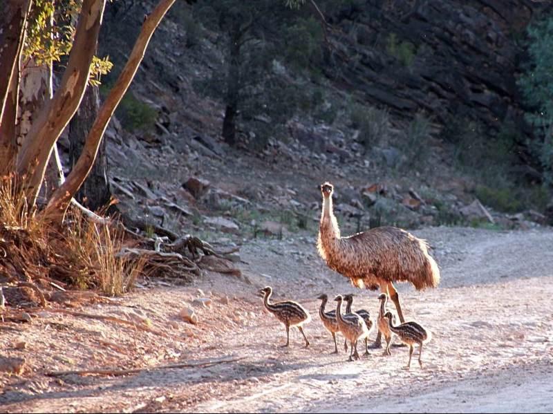 Australie biedt veel verschillende fauna die u tegen kunt komen