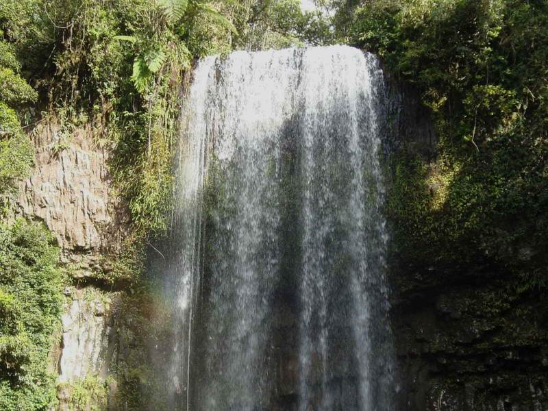 De wilde natuur van Australie zult u van dichtbij kunnen beleven