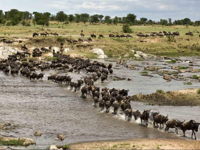 zie deze prachtige dieren van de big five in beweging tijdens uw rondreis door tanzania