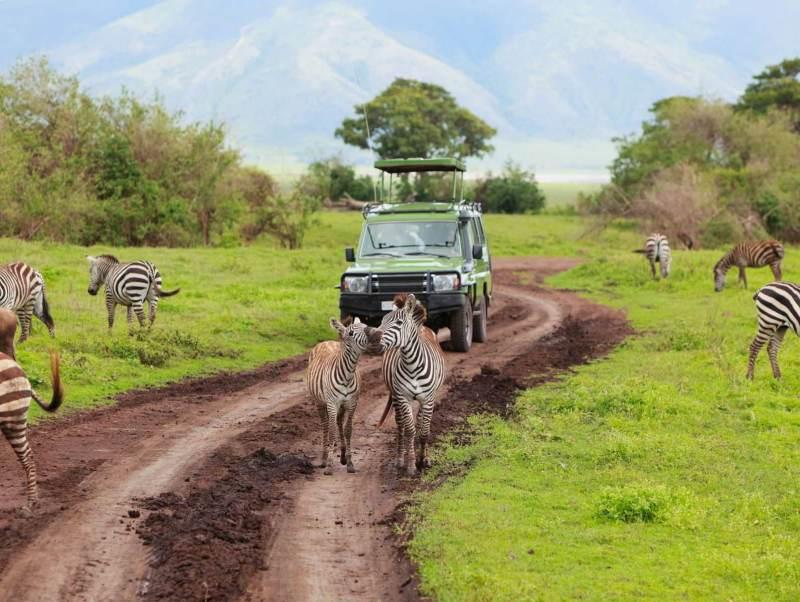 ontdek alle dieren van tanzania en de bijzondere big five tijdens uw vakantie