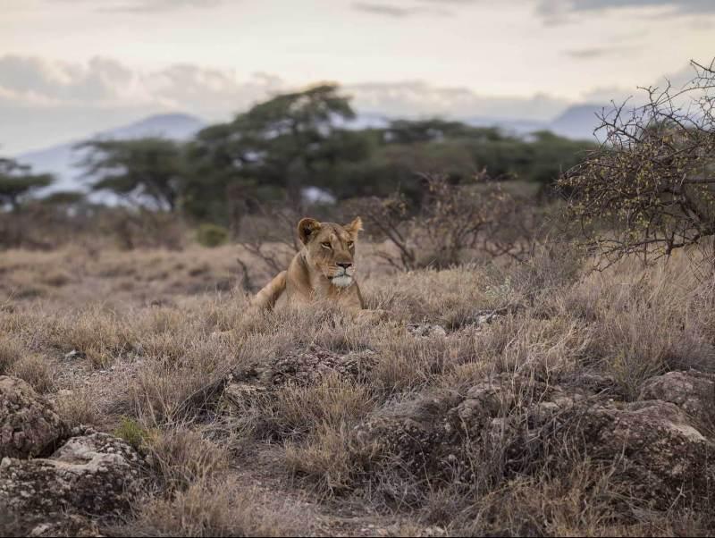 Voel u veilig zelfs zo dicht bij de koning van tanzania tijdens uw goed verzorgde rondreis