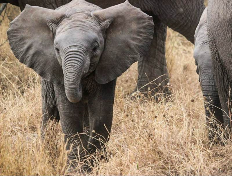 Zie deze grootse dieren, ook de kleintjes, tijdens uw rondreis door tanzania