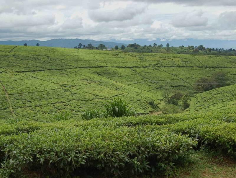 ontdek hoe de lokale mensen het landschap bewerken in Tanzania