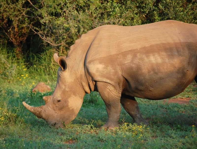 Deze wilde dieren in Zuid-Afrika zult u nooit vergeten als u hier langs komt tijdens een safari
