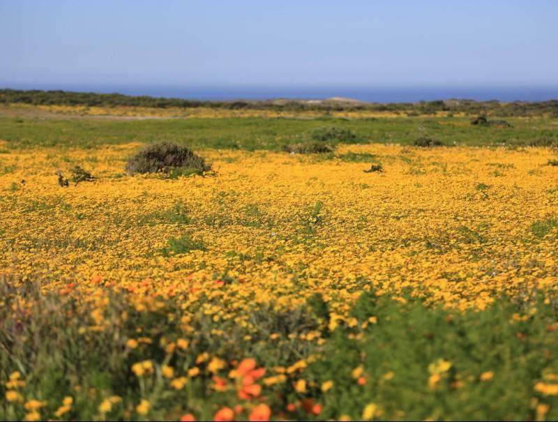 De flora die u ziet tijdens uw rondreis door Zuid-Afrika is zeker niet te missen