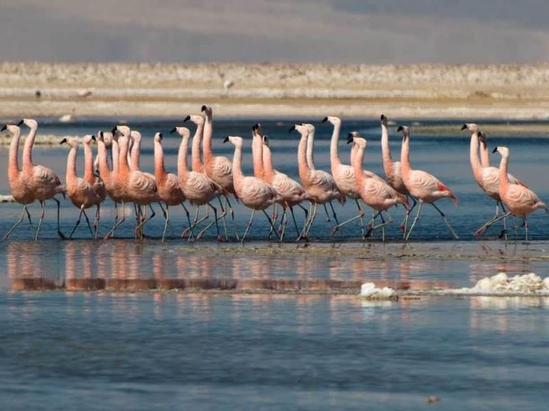 De Atacama Salt Flat die u gaat bezoeken tijdens uw individuele autorondreis