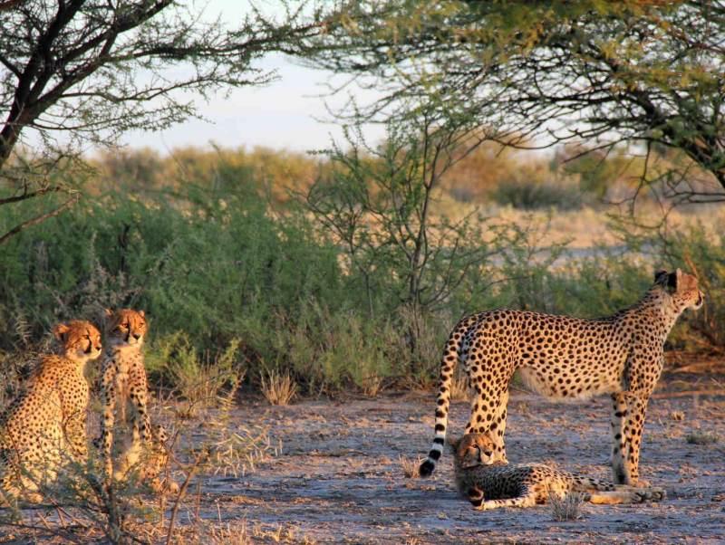 Tijdens uw rondreis door Botswana gaat u veel wilde dieren tegenkomen
