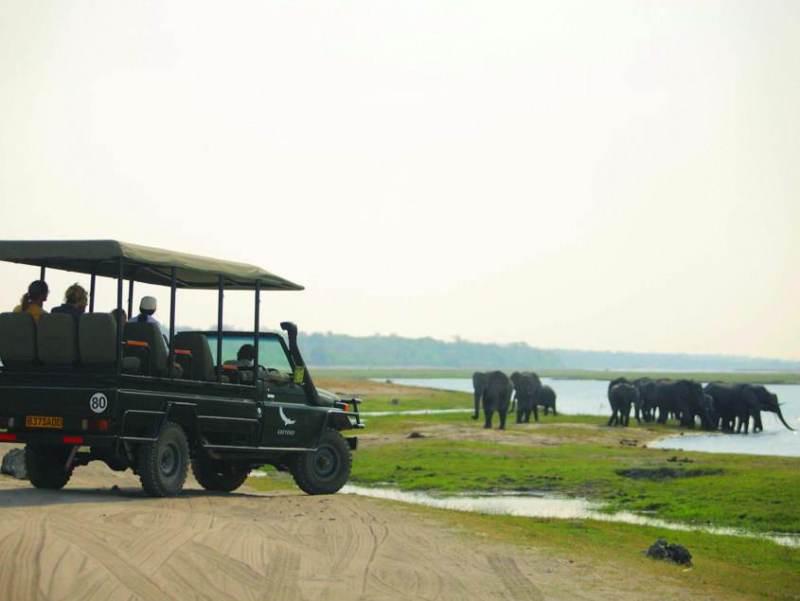 Tijdens uw autorondreis kunt u het Chobe National Park gaan bezichtigen met zijn mooie flora en fauna