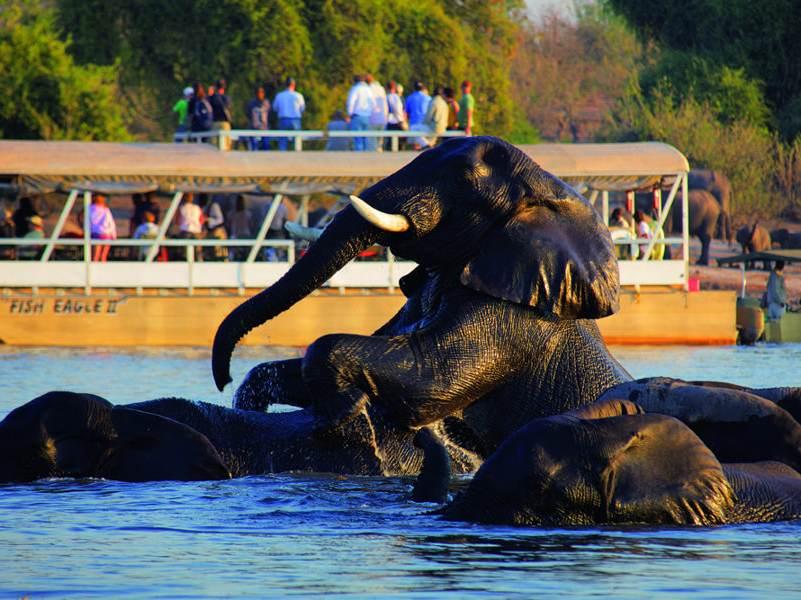 De kans is groot dat u tijdens uw rondreis meerdere olifanten gaat tegenkomen in Botswana