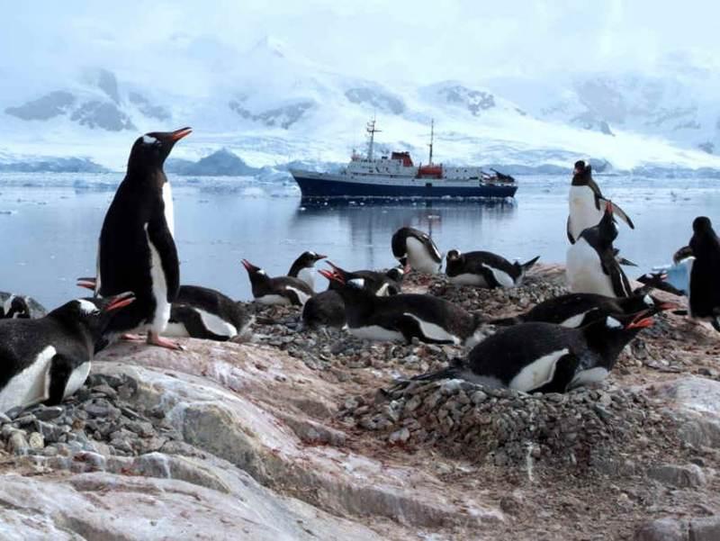 Een groep pinguins bij elkaar met op de achtergrond een boot
