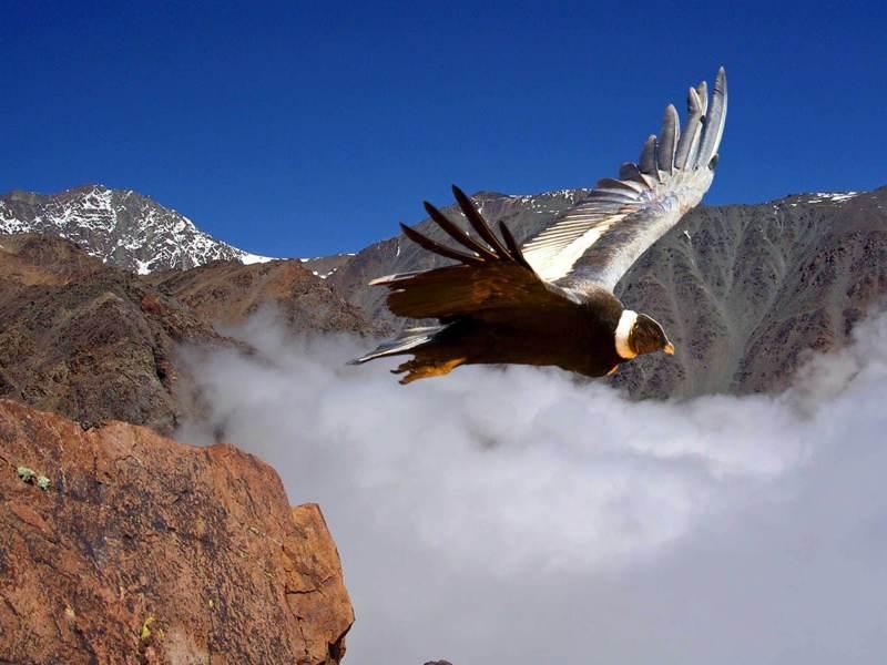 Een roofvogel met het landschap van bergen in Patagonië