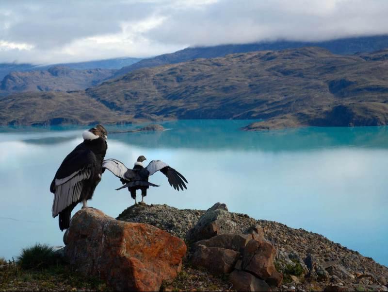 Twee roofvogels met het landschap van bergen in Patagonië