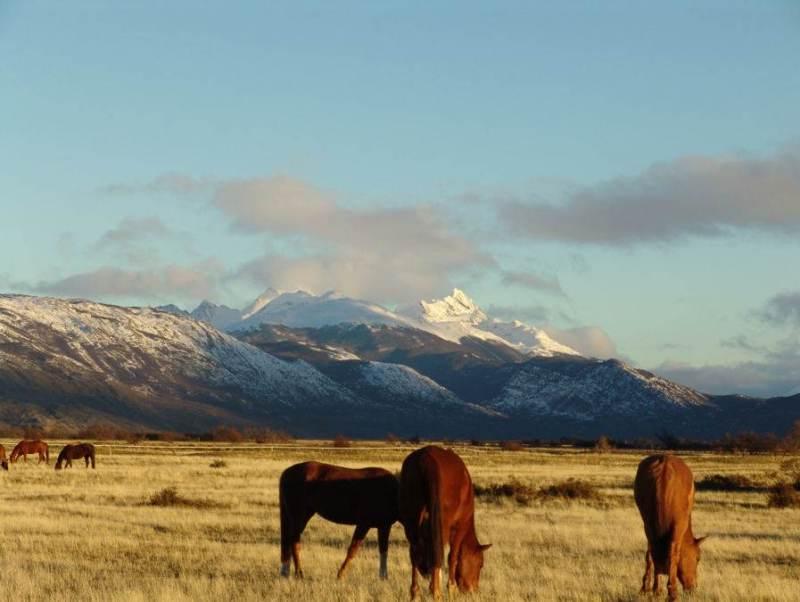Hier ziet u een landschap van bergen met koeien op de voorgrond. Dit kunt u tegenkomen tijdens uw rondreis Chili Argentinië