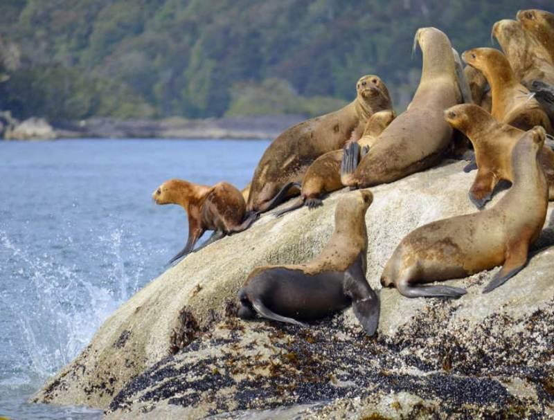 Een groep zeehonden die aan het water ligt in Patagonië