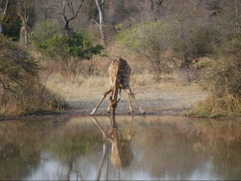 In Tanzania zijn veel dieren te vinden, zoals de prachtige giraf.