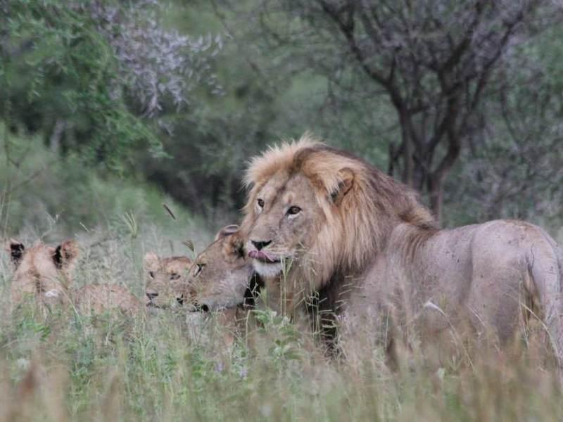 Tijdens uw rondreis door Tanzania gaat u het Serengeti National Park bezoeken.