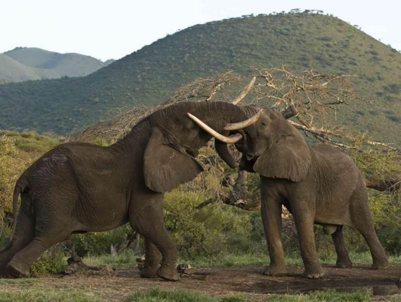 Het Katavi National Park dat u tijdens uw rondreis door het zuiden van Tanzania gaat bezoeken.