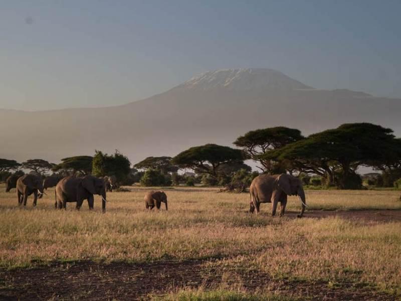 Olifanten zijn veel te vinden in Tanzania, tijdens uw rondreis is de kans groot dat u een olifant spot.