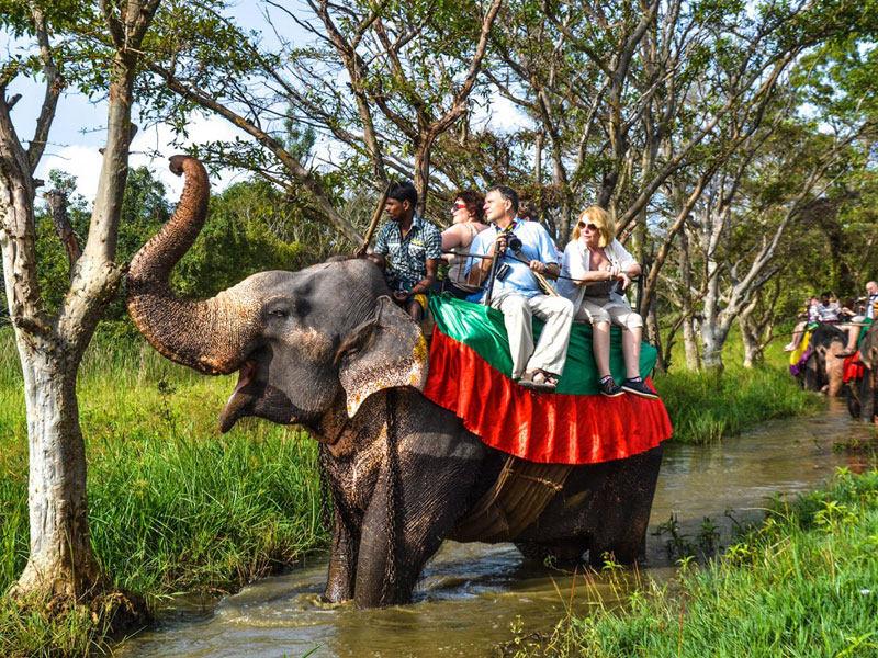 Tijdens uw rondreis door Sri Lanka zijn er veel olifanten te vinden.