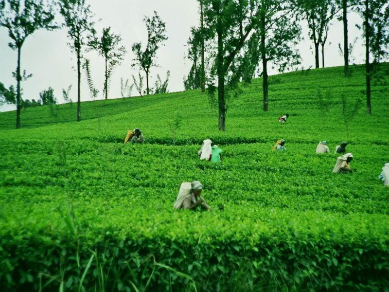 U gaat Nuwara Eliya bezoeken tijdens uw rondreis door Sri Lanka.