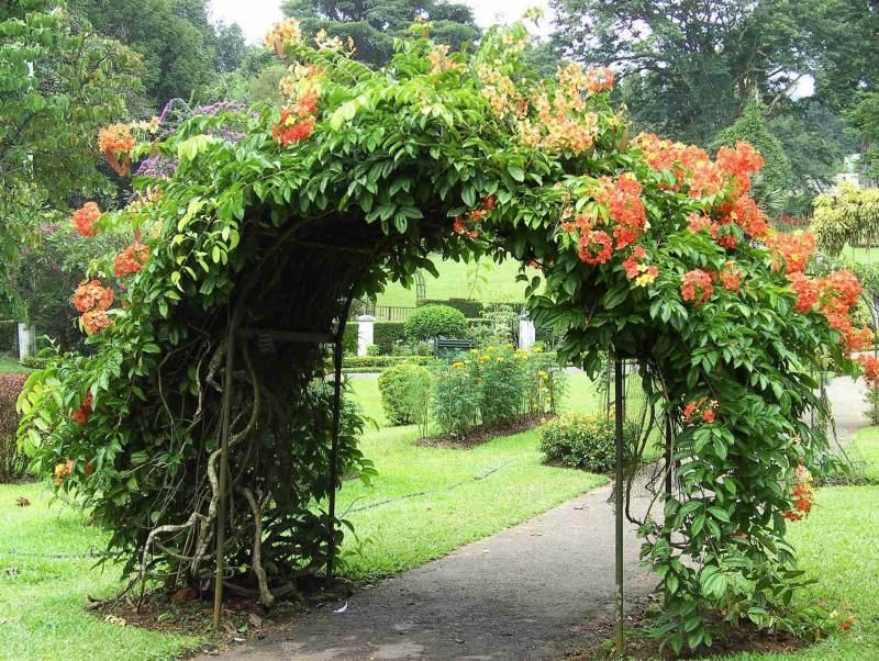 Tijdens uw rondreis door Sri Lanka kunt u genieten van de flora en fauna van het land.