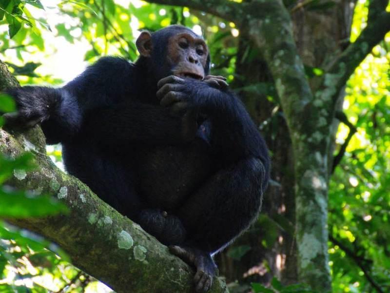 tijdens uw rondreis bezoekt u het Bwindi Impenetrable Forest in Oeganda