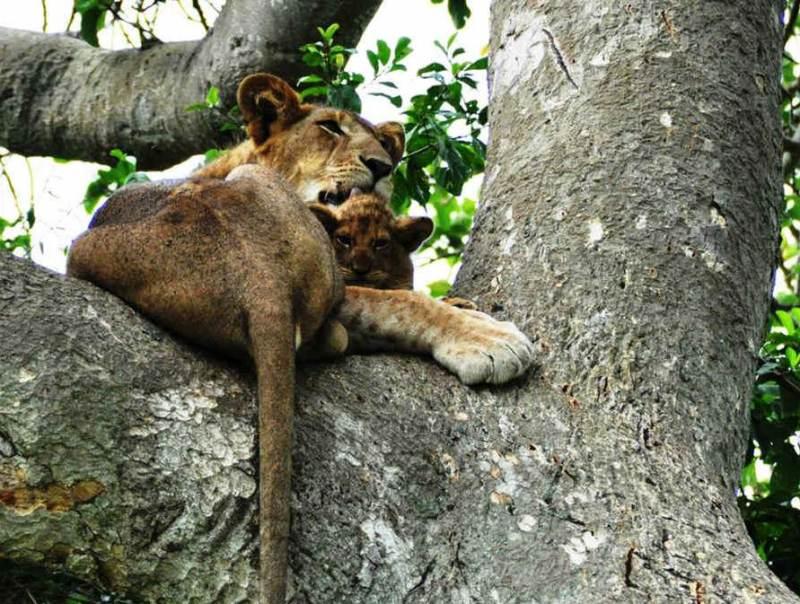 Tijdens uw rondreis door Oeganda gaat u het Murchison Falls National Park bezoeken.