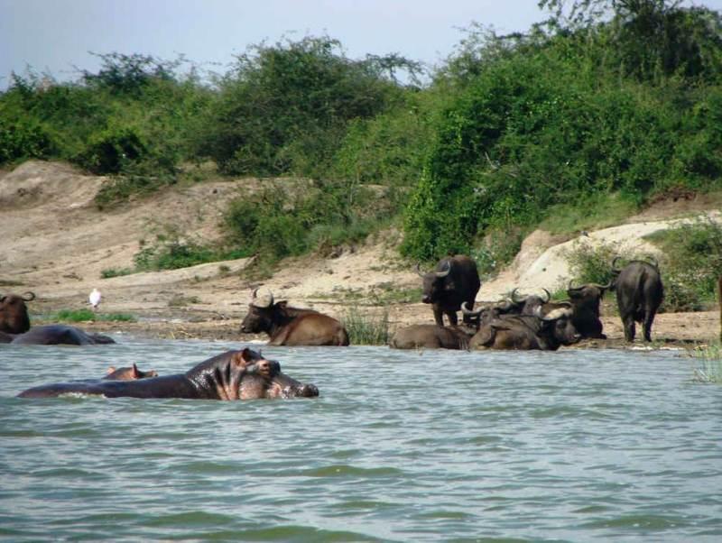 U gaat het Queen Elizabeth National Park tijdens uw rondreis door Oeganda bezoeken.