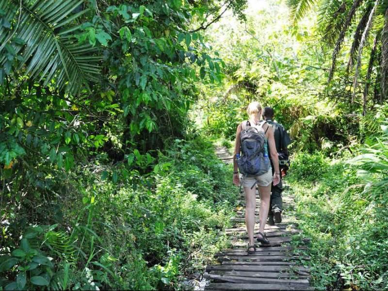 Tijdens uw rondreis gaat u verschillende wandelingen maken door de prachtige flora en faun van Oeganda.