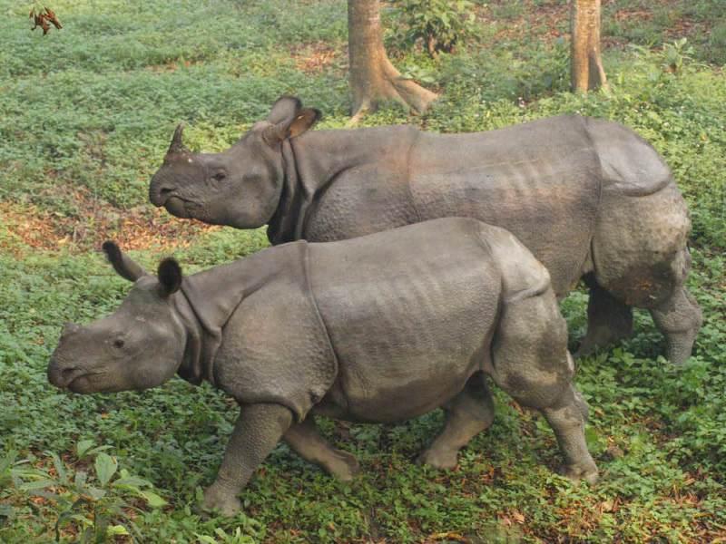 Chitwan nationaal park is eveneens een van de bestemming tijdens de vakantie